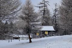 col des Planches (bulbocode909) Tags: valais suisse coldesplanches montchemin montagnes nature automne neige arbres forêts mélèzes chalets jaune brume stratus givre