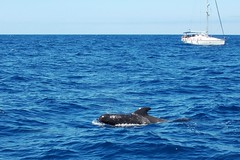 here they are! :) (green_lover) Tags: whale animals ocean water boat tenerife canaryislands travels blue fauna 7dwf horizon