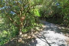 2017-110705 (bubbahop) Tags: 2017 rotorua newzealand waimangu volcanic valley