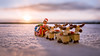 Hyvää Joulua! (Reiterlied) Tags: 1835mm ackbar angle christmas d500 dslr lego legography lens minifig minifigure nikon photography reindeer reiterlied santaclaus sigma starwars stuckinplastic sunset toy wide winter yoda