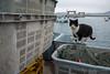 田代島 ネコ (GenJapan1986) Tags: 2017 ネコ 動物 太平洋 宮城県 海 田代島 石巻市 離島 日本 cat animal sea pacificocean island tashirojima miyagi japan fujifilmx70