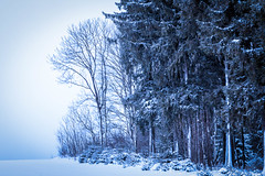 The Quiescent Serenity of Frigid Winter Days II. (icarium82) Tags: canoneos5dmarkiv erzgebirge nature landscape winter travel snow landschaftterrain cold canonef85mmf12liiusm sundaylights christmasspirit ngc