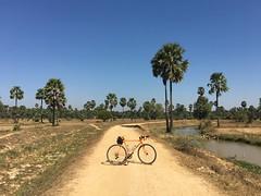 Myanmar, Ayeyarwady Region, Hinthada District, Ingapu Township, Put Kone Village Tract (Die Welt, wie ich sie vorfand) Tags: myanmar burma ayeyarwadyregion ayeyarwady irrawaddy hinthadadistrict hinthada bicycle cycling surly crosscheck sugarpalm gravel sand ingaputownship ingapu putkone