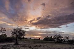 Serengeti sunset (tmeallen) Tags: sunset endoftheday rainyseason rainclouds trees silhouttes dramaticsky grumetigamereserve serengeti tanzania eastafrica