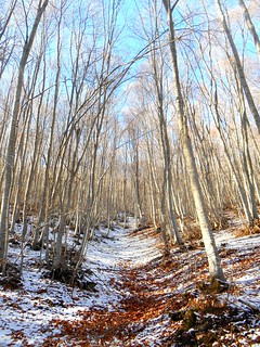 Στο δάσος με τις οξιές / Walking in the beech forest