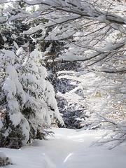 PC290004 (turbok) Tags: ennstal landschaft schnee schneeundeis stimmungen winter c kurt krimberger
