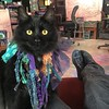 New Year's Day. Complete with Mardu Gras Cats. Sulu stole my lap for warmth while watching the new Star Trek with friends. . . . . #cats #blackcatsofinstagram #kitten #blackcatsclub #meow #sulu #startrek (ClevrCat) Tags: ifttt instagram new year's day complete with mardu gras cats sulu stole lap for warmth while watching star trek friends blackcatsofinstagram kitten blackcatsclub meow startrek