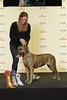 BIR Grupp 2: Dogo Canario - Trolls Corner's Isonoe (Svenska Mässan) Tags: mydog bir birmydog