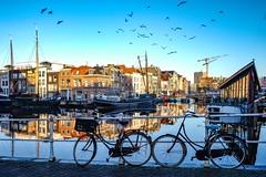 Birds (thijs.coppus) Tags: bikes fietsen winter birds vogels water boot schip ship boat boten galgewater singel gracht canal zuidholland southholland dutch holland niederlande nederland netherlands leiden inexplore explore