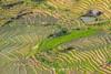 File588.0617.Trồng Tồng.Cao Phạ.Mù Cang Chải.Yên Bái. (hoanglongphoto) Tags: asia asian vietnam northvietnam northwestvietnam landscape scenery vietnamlandscape vietnamscenery vietnamscene terraces terracedfields terracedfieldsatvietnam transplantingseason sowingseeds afternoon sunny sunnyafternoon sunnyweather valley flanksmountain hdr canon canoneos1dsmarkiii canonef70200mmf28lisiiusmlens tâybắc yênbái mùcangchải caophạ phongcảnh ruộngbậcthang ruộngbậcthangmùcangchải thunglũng mùacấy đổnước mùacấymùcangchải đổnướcmùcangchải sườnnúi buổichiều nắng nắngchiều bóngđổ abstract trừutượng curve đườngcong home house nhà trồngtồng thunglũngcaophạ