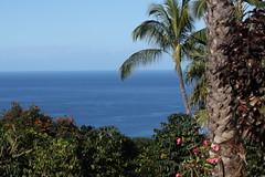 Original Hawaiian Chocolate 12 15 17 051 (Az Skies Photography) Tags: original hawaiian chocolate originalhawaiianchocolate kona hi konahi december 15 2017 december152017 121517 12152017 canon eos 80d canoneos80d eos80d canon80d cacao travel travelphotography vacation hawaiianvacation anniversary trip anniversarytrip 25th 25thanniversary