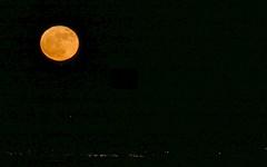 super moon (Riex) Tags: orange moon lune fullmoon pleinelune supermoon night nuit sanfranciscobayarea sfbay california californie fz1000 leicadcvarioelmarit