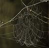 Wet Web (ianbartlett) Tags: outdoor light mist fog trees joggers jay cobweb waterdroplets