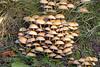 Pilze (www.nbfotos.de) Tags: pilz pilze mushroom mushrooms