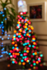 Christmas in NYC (jomak14) Tags: 2017 christmasinnyc fotodioxpropktom43adapter gf2 microfourthirds panasonic pentax50mmf12 smcpk50mmf12 christmastree bokeh