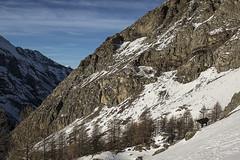 Chamois (Giovanni Aquaro) Tags: rupicapra camoscio winter png gran paradiso parco park blue color tree larici inverno snow neve