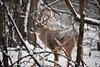 Stealthy (marensr) Tags: center nature village park north mammal animal stag deer white tail snow winter december landscape tree grass