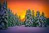 Happy New Year! (Kalev Vask.) Tags: digital kalevvask postprocessed photoshop photomanipulation digiart photoart painterly artistic creative estonia winter manipulated ownphoto phototopainting trees snow sunset topaz on1 happynewyear