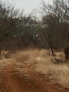 Zimbabwe Cape Buffalo Hunt 58