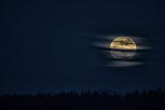 Happy New Year | 2018 | Seattle (sunrisesoup) Tags: moon supermoon wolfmoon fullmoon january 2018 seattle wa usa bellevue madrona madronapark night newyears nye newyearseve explore sunrisesoup