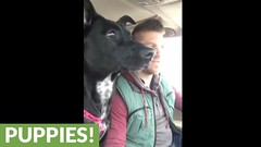 Dog realizes she's at dog park, loses her mind (Darth Viral) Tags: dogvideos dogsandpuppies funnydogs funnypets funnyvideos petvideos puppyvideos viralvideos