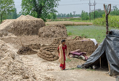 Dung piles for cooking fuel (Pejasar) Tags: family business sugarcane processing near delhi india home girl reddress dung cookingfuel piles blackplastictent covering treelimbpoles fields crops trees