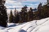 Winter (oonaolivia) Tags: flims graubünden grisons switzerland schweiz winter walking hiking landscape landschaft winterlandschaft nature schnee snow