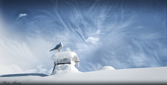 La cheminée (Didier HEROUX) Tags: cheminée vent ciel sky neige snow froid hiver winter hautesavoie france blanc bleu déchirure force oiseau bird grandbornand annecy alpesdunord didierheroux herouxdidier spectaculaire auvergnerhônealpes janvier saison photography 2018 mouette alpes alpi alpen