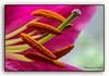 Indoor macro. (Hans van Bockel) Tags: cameraconnectcontrol 105mm app bloemen d7200 indoor macro natuur nikkor nikon s6 samsung statief vaas vanguard explore