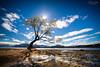 Shooting for the trees (A Camera Story) Tags: lakewanaka lonelywillow newzealand otago southisland wanaka nz sonydslta99 sony2470mmf28cz