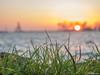 Grass focus (✦ Erdinc Ulas Photography ✦) Tags: grass gras netherlands hoorn nederland holland green groen focus panasonic water sunset zonsondergang sun zon orange oranje geel yellow vuurtoren firetower city stad