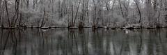 on the river (bkellerstrass) Tags: flus schwan wasser winter bäume spiegelung