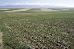 Anglų lietuvių žodynas. Žodis agronomy reiškia n agronomija lietuviškai.