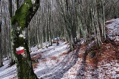 Salendo al monte Falterona (LLauraNLS) Tags: appennino landscape foresta forest forestecasentinesi trekkingdelleforestesacre paesaggi nature italia toscana hiking trekking mountains montagne dogs cani dogtrekking sentierodelleforestesacre