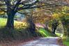 Camino de Llagú II (ccc.39) Tags: asturias latores oviedo llagú camino otoño árboles naturaleza road automn