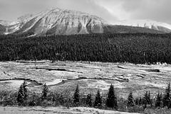 Canada, Autumn snowfall (Vittorio Ricci (thanks +++ 3.3 millions views)) Tags: canada alberta canadianrockies
