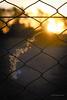 Dorado (Tato C) Tags: sunset atardecer cerca fence hierba espiga grass luz light flare dof