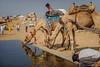 ©Shahid Hashmi (Shahid Hashmi) Tags: asia asian colorful india indianphotographs orient rajasthan rajasthanindia rajasthaniphotographs royal shahid shahidhashmi shahidhashmiphotography vanishingcultures street