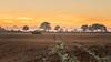 Orange dawn (Sebo23) Tags: orange landscape landschaft landschaftsaufnahme dawn morgenstimmung morninglight morgenlicht morgen nature bäume trees naturaufnahme mitsty canon6d canon10028l