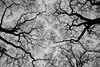 2017-12-02-0105 (Kevin Maschke) Tags: london fuji fujifilm fujifilmxt2 fujixt2 fujix city londoncity londonstreets black white blackwhite blancoynegro bw bnw nature outdoors air freshair tree