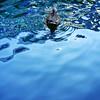 水様=Appearance of water-155/From dense to empty (kouichi_zen) Tags: blue wave nature reflection empty sky