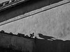 OMBRA (Claudia Celli Simi) Tags: ombra uccello piccione tetti luce sole viterbo geometrie bw bn biancoenero blackandwhite monocromo contrasto