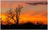 (etzel_noble) Tags: sunsetphotography canonphotography canon70200mm canon6d lakeeriemetropark tree silhouette sunsetwxcom sunset