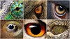 Eyes (phil1496) Tags: animals eyes yeux montage collage jeu