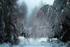 Winter (Rita Eberle-Wessner) Tags: forest wald nebel fog wood baum bäume tree trees schnee snow birken biegen bend break schneedecke