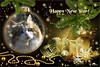 Happy New Year ♥ 2018 (Xena*best friend*) Tags: boss happynewyear happy2018 cats whiskers feline katzen gatto gato chats furry fur pussycat feral tiger pets kittens kitty piedmontitaly piemonte canoneos760d italy wood woods wildanimals wild paws animals calico markings ©allrightsreserved purr digitalrebelt6s efs18135mm flickr outdoor animal pet collage