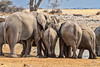 Heads in (NettyA) Tags: 2017 africa etoshanationalpark namibia okaukuejowaterhole elephant safari travel wildlife africanelephant herd waterhole drinking tails