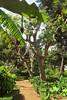 happiness is... (green_lover) Tags: path trees botanicalgarden laorotava tenerife canaryislands spain plants green vegetation travels nature smileonsaturday happinessis