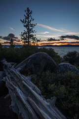 Sunset Tree (Middle aged Nikonite) Tags: tree wood trunk rocks lake tahoe california nikon d750 sunset colors landscape nature outdoor sky