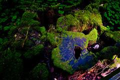 Forest Floor (k4eyv) Tags: muirwoods california sanfrancisco redwood green plants leica leicaq